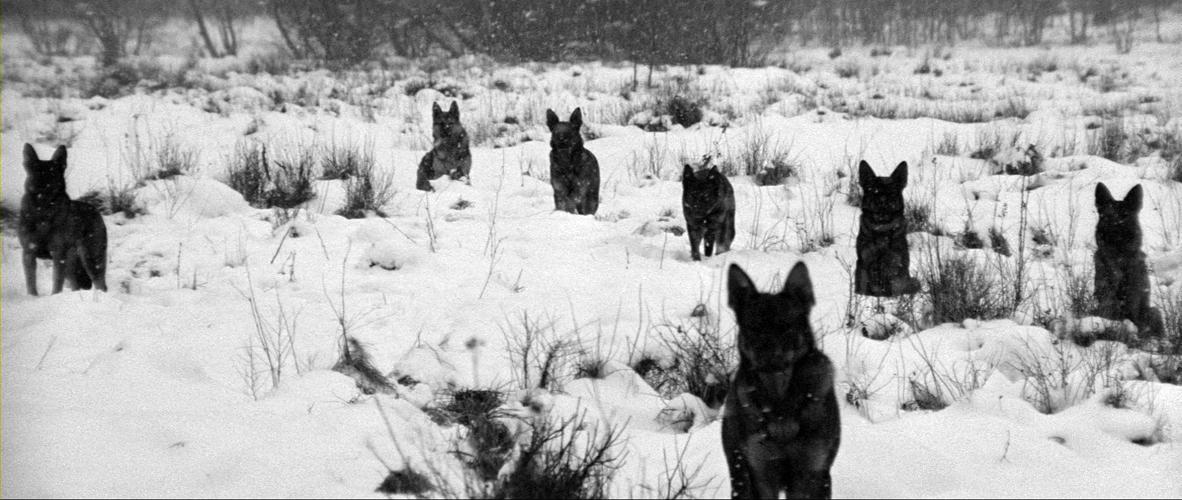 marketa-lazarova-the-wolves.jpg